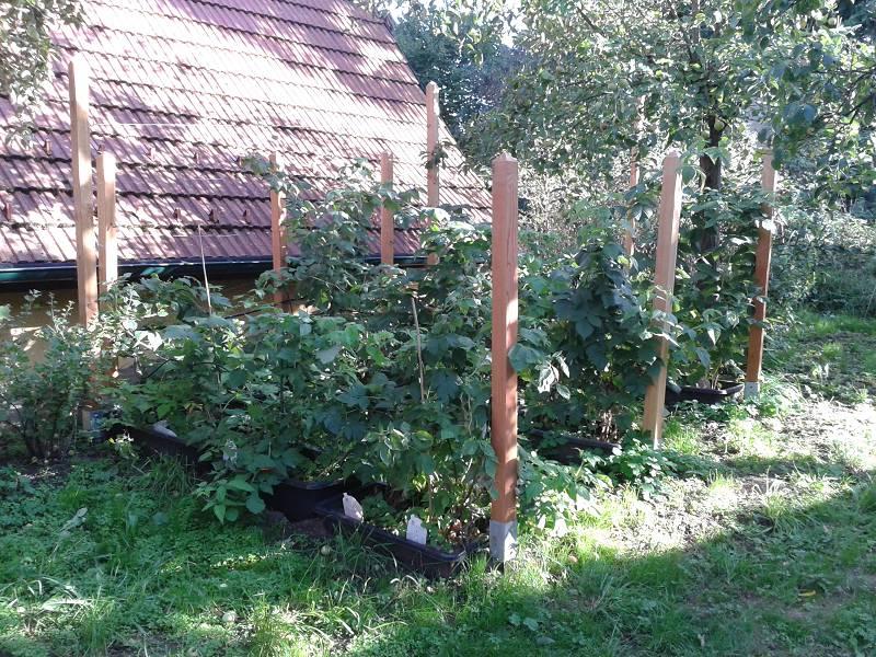 Himbeeren Im Garten 2 Garten Betrachtungen